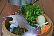 Fish Stock – 59 - 881/882