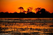 Sunset over Okavango Delta