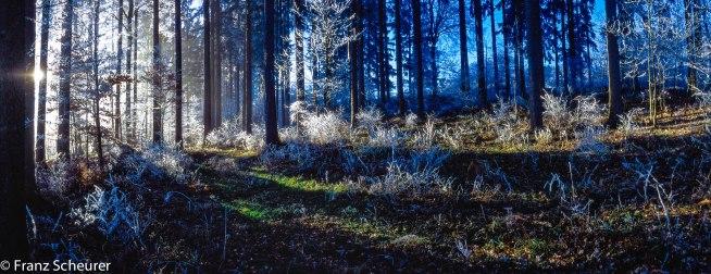 Swiss Jura in January - Hoar frost